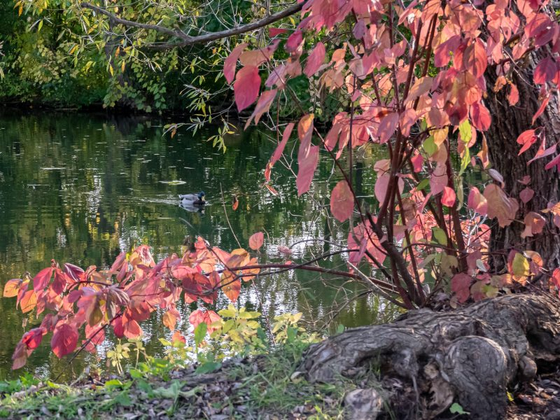 Ottawa Arboretum - SG Nature ©Carl Lepage