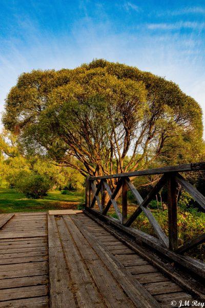 Ottawa Arboretum - SG Nature ©Jean Michel Roy